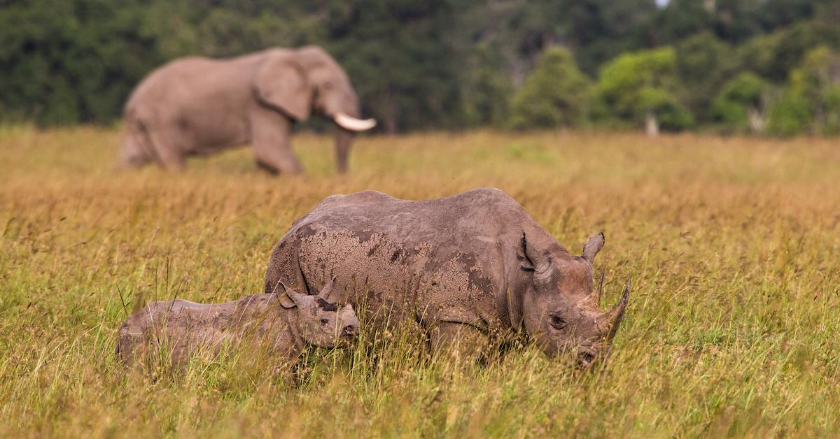 rhino-elephant-tanzania-africa-1563205408346.jpg