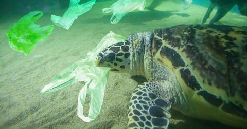 ocean-pollution-marinelife-1575409272580.jpg