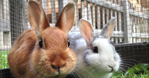 green-matters-australia-cosmetics-animal-testing-1550604644581-1550604646879.jpg