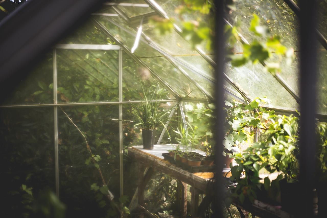 greenhouse-691704_1280-1507146457350-1507146459546.jpg