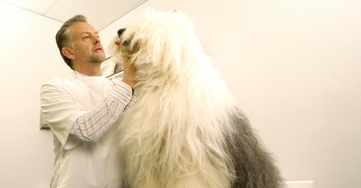 Dogs Probiotics