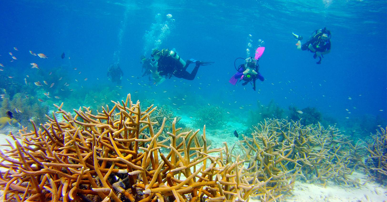 GM-Bonaire-3-1530043525004.jpg