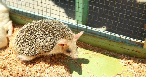 china bans farming animals