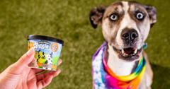 狗冰淇淋味