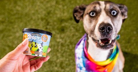 dog ice cream flavors