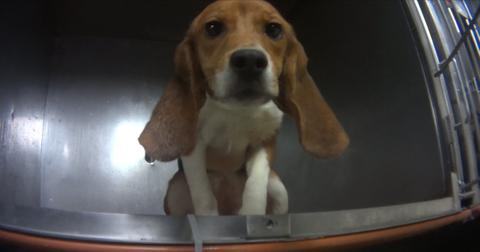 dog-beagle-lab-free-1553010219080.JPG