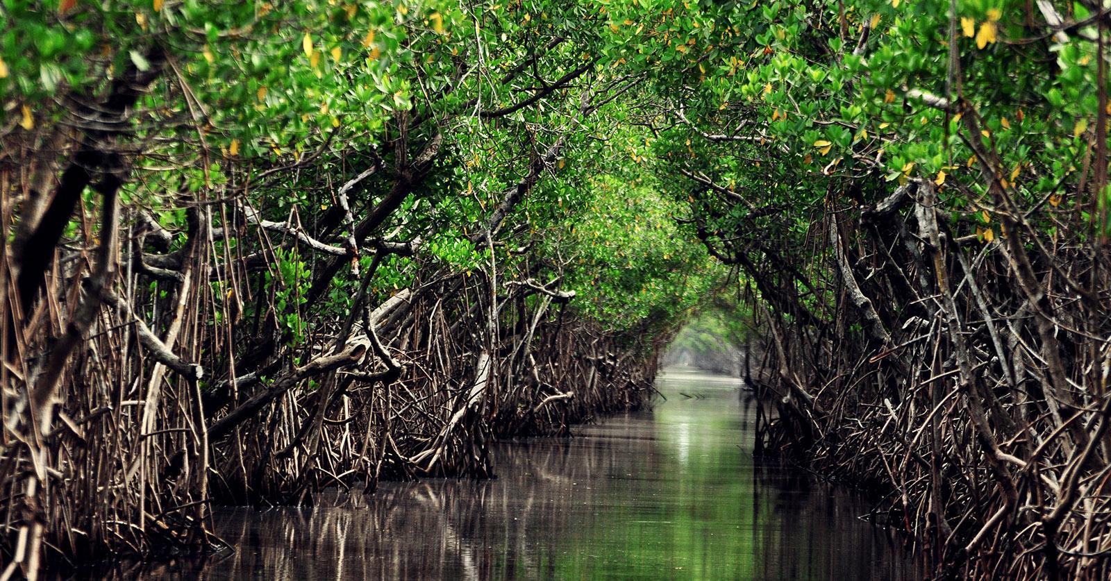 Mangrove1-1537388929070-1537388931354.jpg