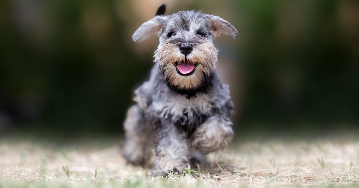 puppy-mill-ban-1546468060347.jpg