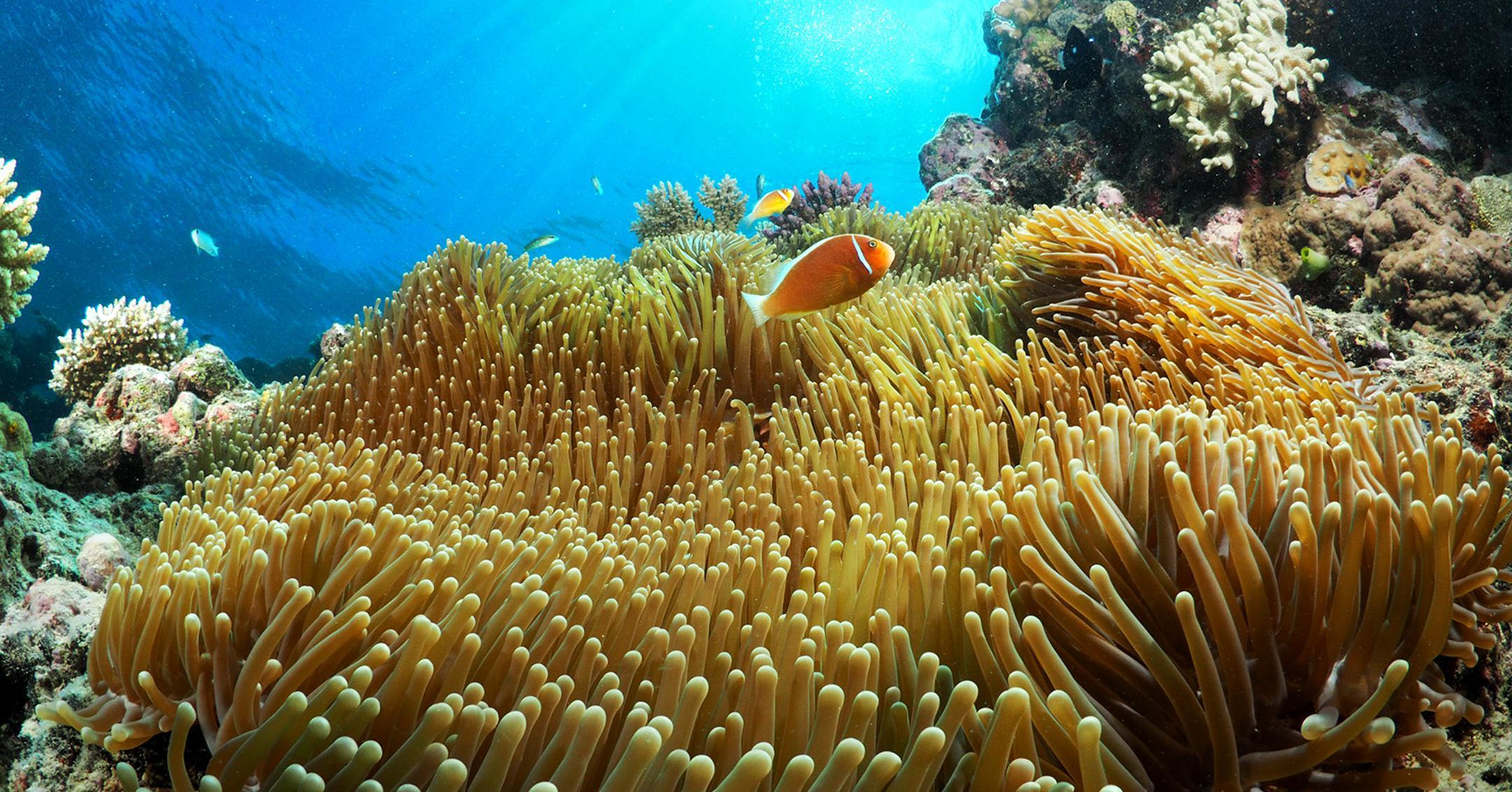 GreatBarrierReef4-1536270820020-1536270822422-1536871270873-1536871273169.jpg