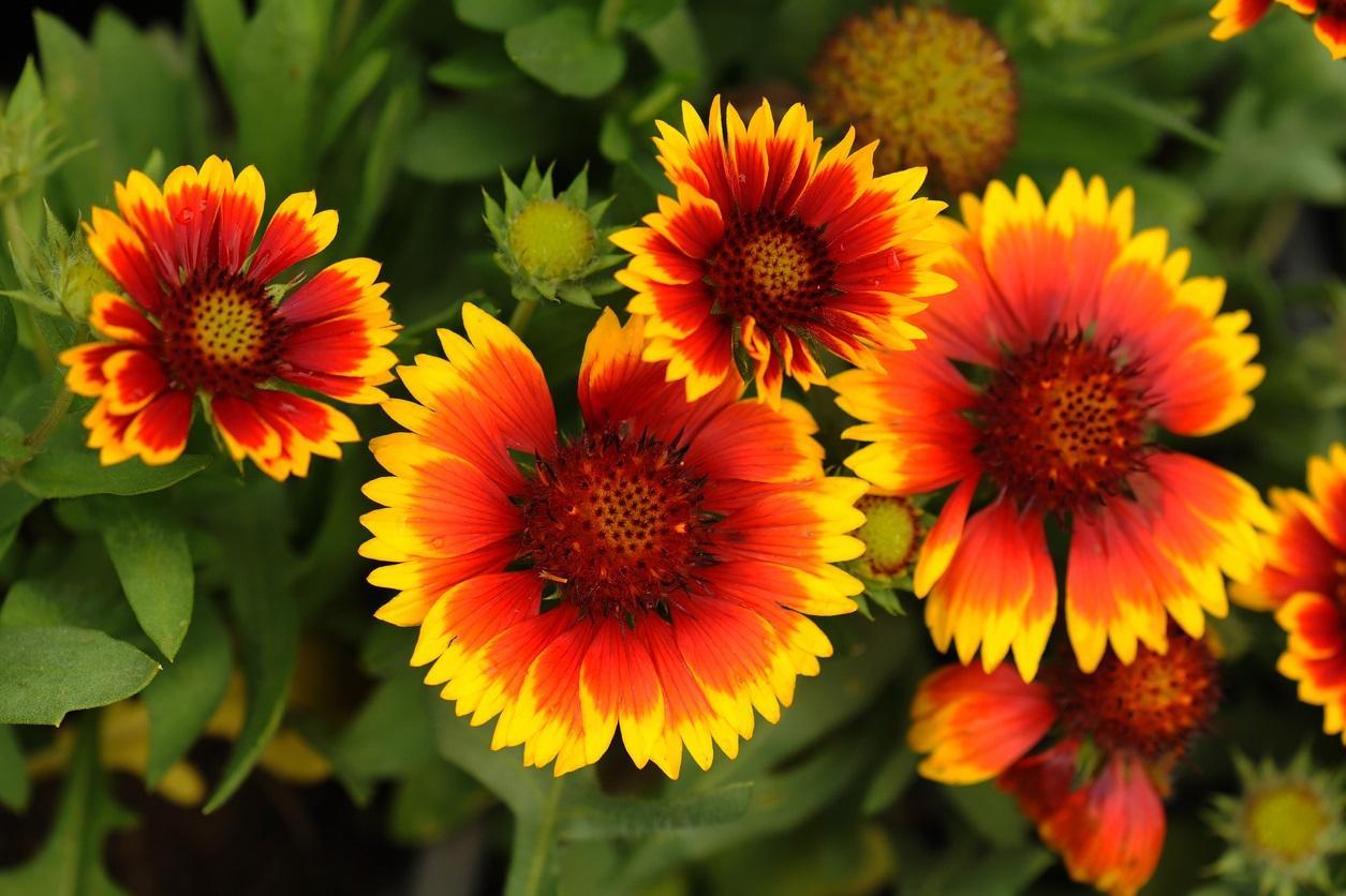 flowers3-1494957381435.jpg