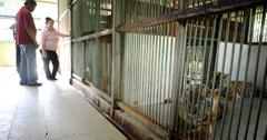 印尼动物园死亡