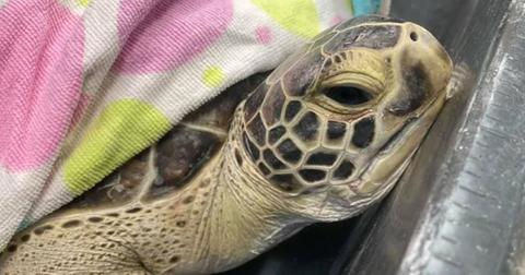 freezing-sea-turtle-rescue-cover-1606833908527.jpg