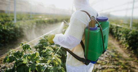 non-toxic-vs-food-safe1-1603304754948.jpg