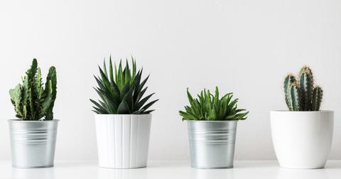 cactus-plant-beginners--1563994919932.jpg