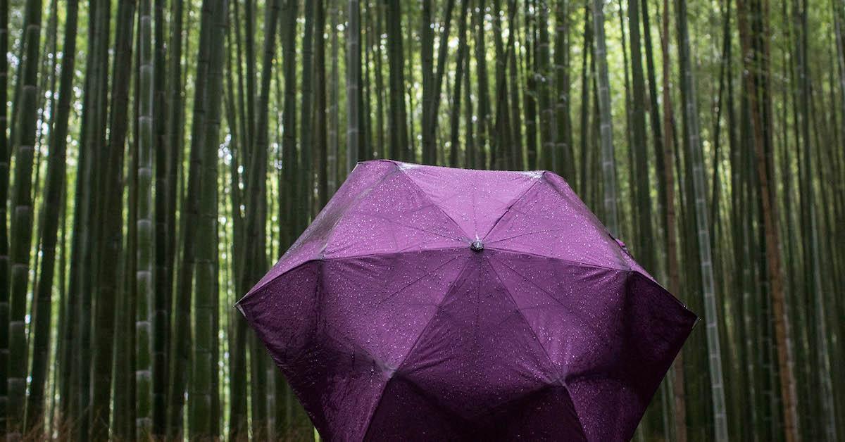 环保是竹子如何?