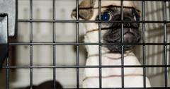 Dog crate training basics