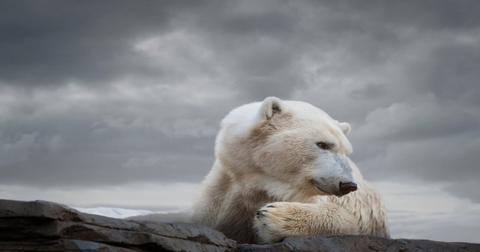 如何与灭绝物种不同的濒危物种