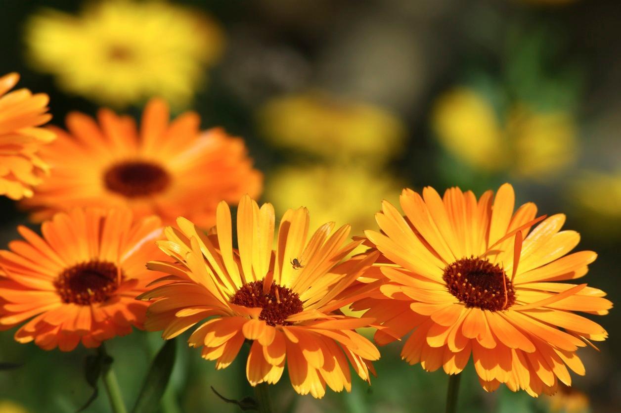 flowers2-1494956742580.jpg
