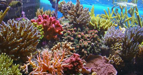 coral-reef-climate-crisis-1602685820912.jpg