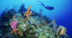 珊瑚礁气候变化