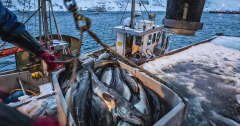 what-is-bycatch-fishing-1604695313056.jpg