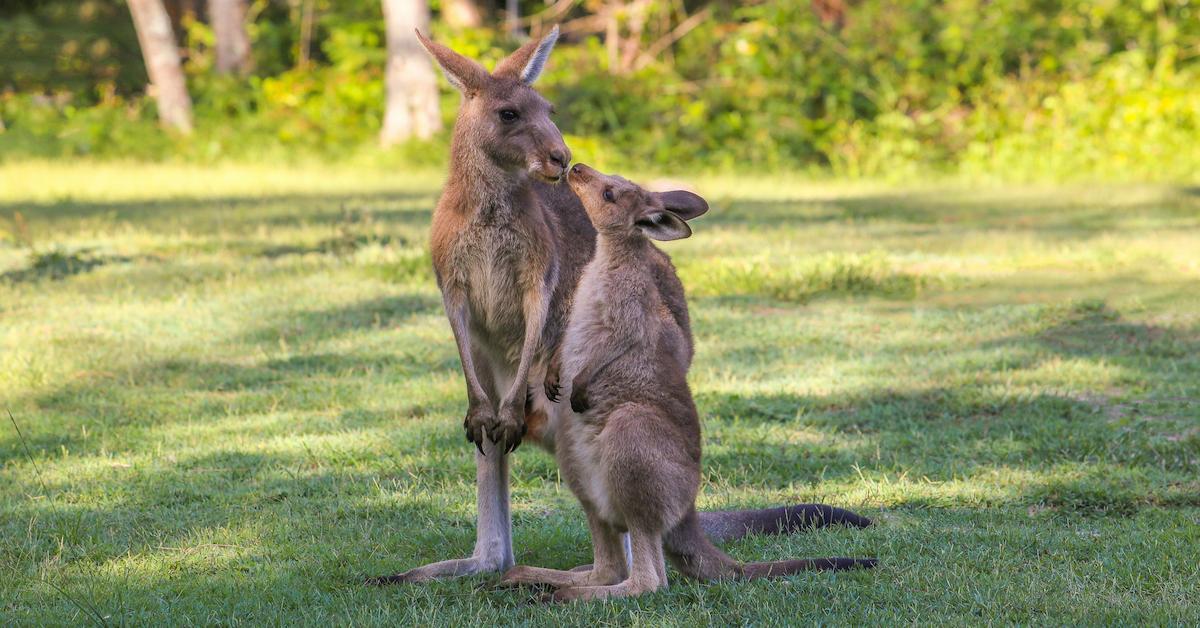prada-bans-kangaroo-leather-2-1597435916844.jpg