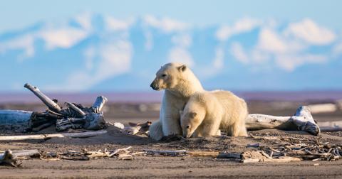 conservation-polar-bear-1562773434531.jpg