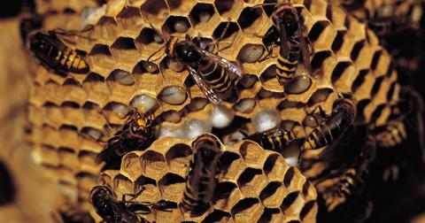 How to humanely remove a bee hive