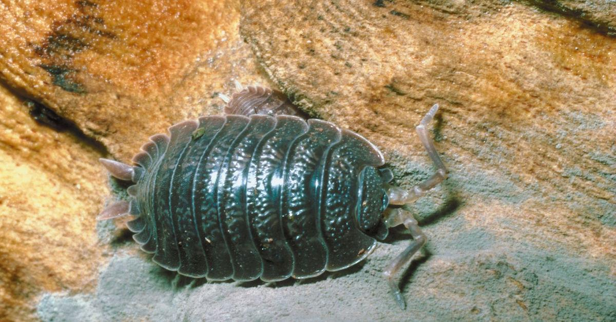 what happened to rollie pollies
