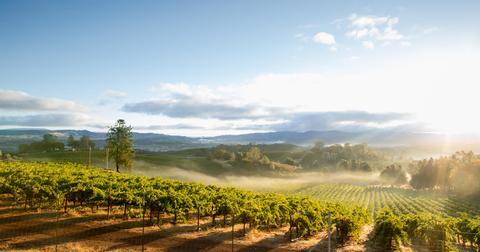 climate-change-vineyards-1580324870739.jpg