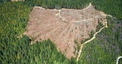 Can we reverse deforestation?