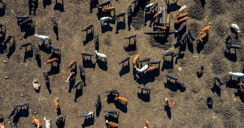 uk-farm-subsidy-redistribution-1606841026240.jpg