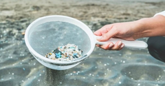 ocean microplastic affects