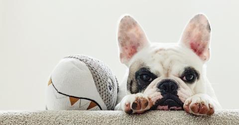 eco-friendly-dog-toys5-1605282229023.jpg