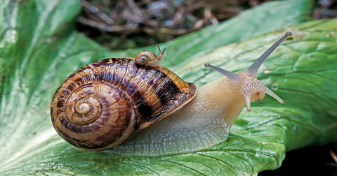 what-are-snails-attracted-to1-1603823437249.png
