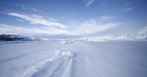 arctic rainforest