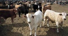 气候变化杀害养殖动物解决方案