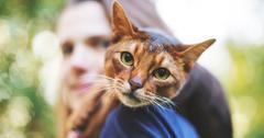 可持续环保猫粮