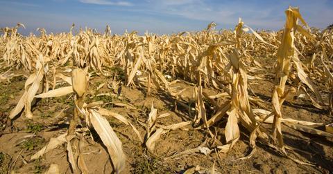 global-warming-effects-crops-1576273766447.jpg