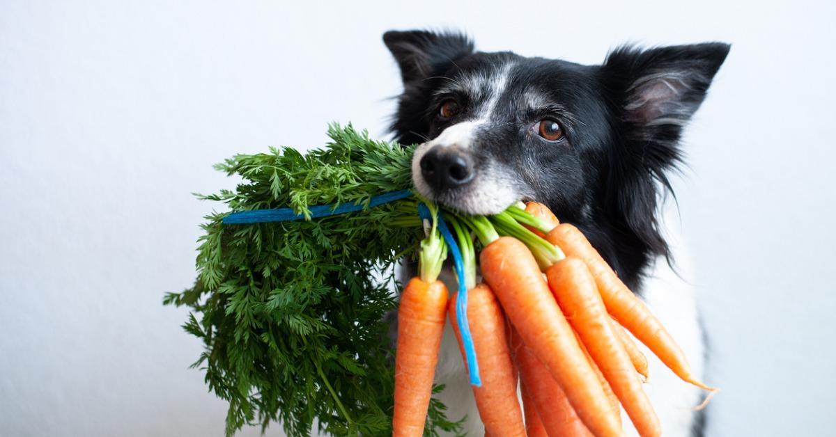 (how to freshen dog's breath) todocat.com