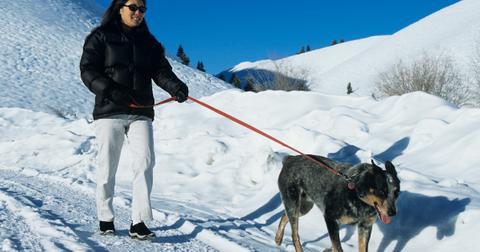 dog walking winter