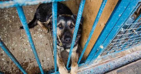 dog-slaughter-houses-south-korea-1549988824268-1549988826816.jpg
