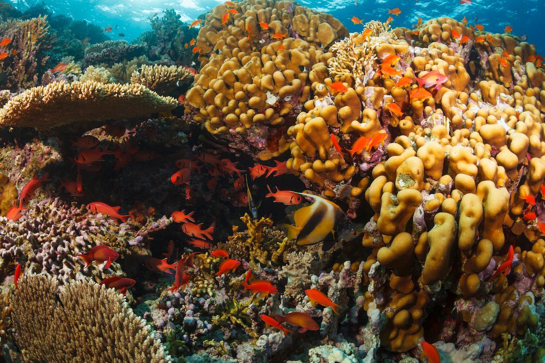 coral-reefs-2-1565901627254.jpg