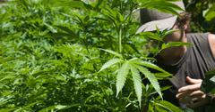 Cannabis Farm Impact