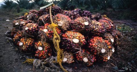 palm-oil-1-1581962051768.jpg