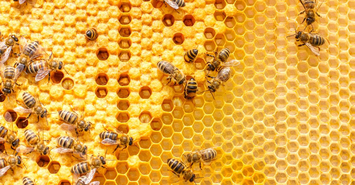 honey-vegan-1566920682292.jpg