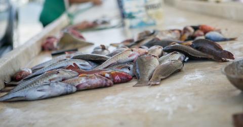 sea lice salmon