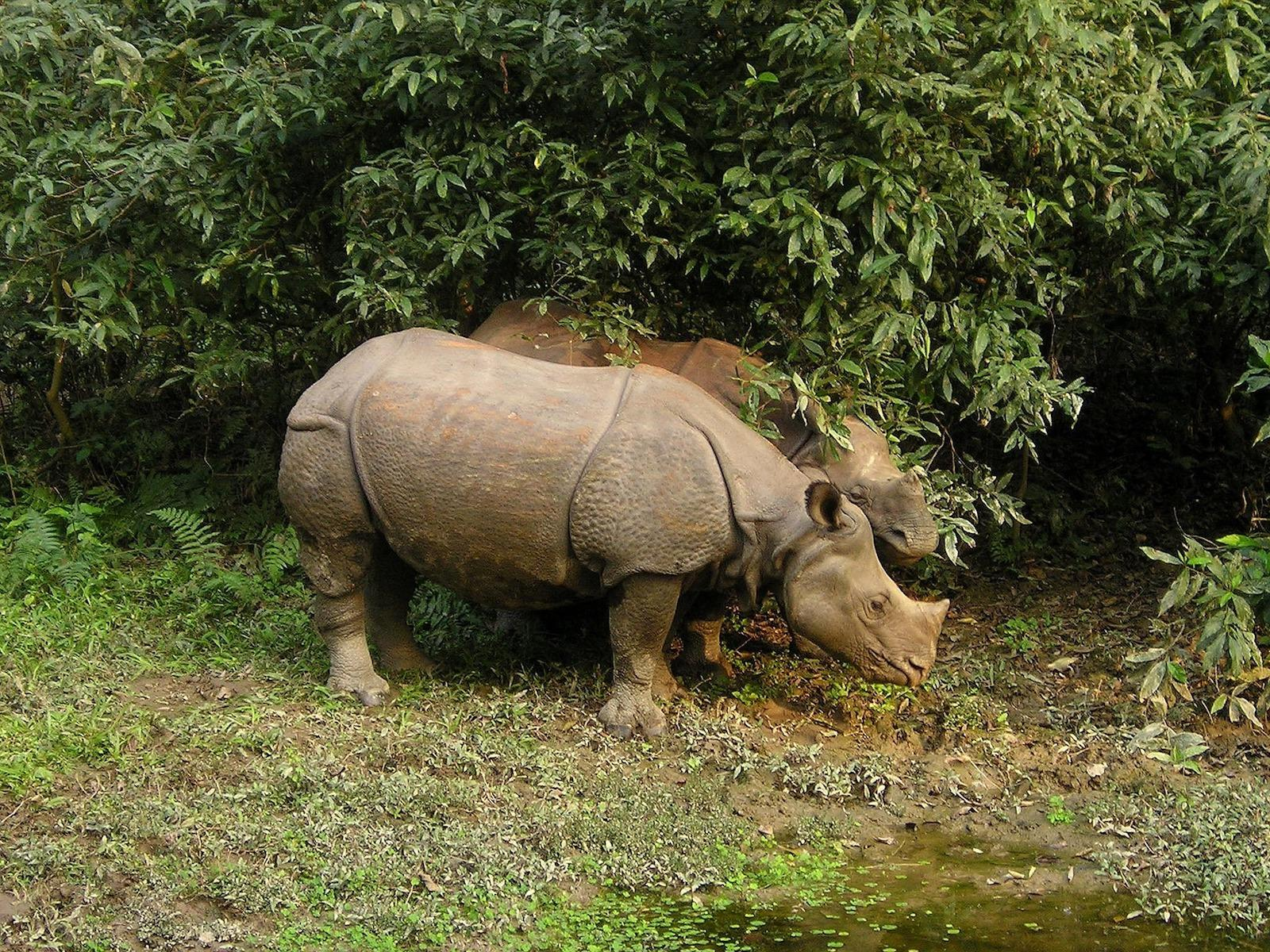 rhino-382_1920-1497929152171.jpg