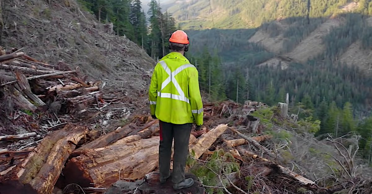 Netflix's 'Big Timber'