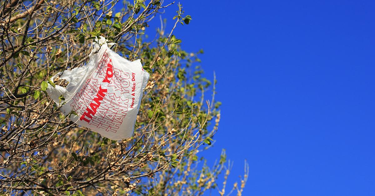 australia-plastic-bag-ban-1544026542443.jpg